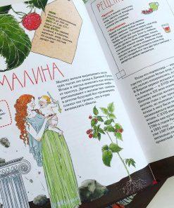 Фруктовые истории (Фиксики), Наталья Преображенская